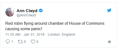 Twitter post by @AnnClwyd: Red robin flying around chamber of House of Commons causing some panic!