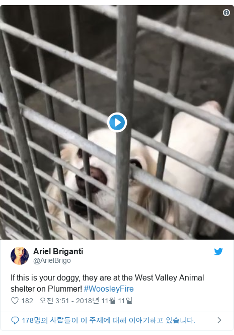 Twitter post by @ArielBrigo: If this is your doggy, they are at the West Valley Animal shelter on Plummer! #WoosleyFire