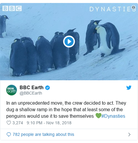 Twitter post by @BBCEarth: In an unprecedented move, the crew decided to act. They dug a shallow ramp in the hope that at least some of the penguins would use it to save themselves 💚#Dynasties