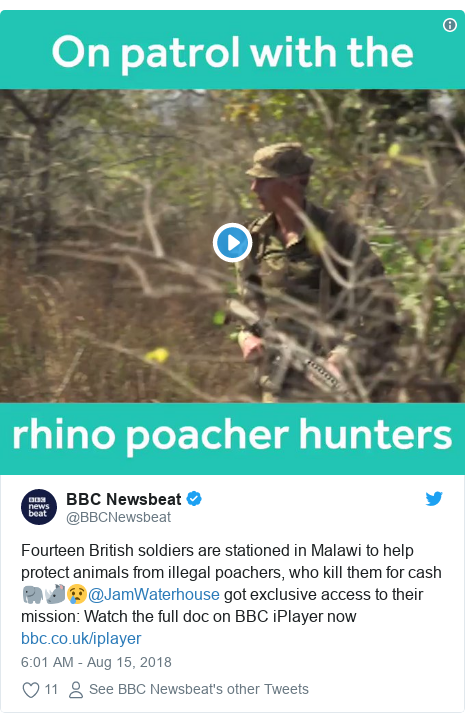 Twitter post by @BBCNewsbeat: Fourteen British soldiers are stationed in Malawi to help protect animals from illegal poachers, who kill them for cash 🐘🦏😢@JamWaterhouse got exclusive access to their mission  Watch the full doc on BBC iPlayer now
