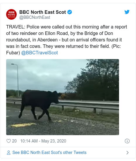Twitter post by @BBCNorthEast: TRAVEL  Police were called out this morning after a report of two reindeer on Ellon Road, by the Bridge of Don roundabout, in Aberdeen - but on arrival officers found it was in fact cows. They were returned to their field. (Pic  Fubar) @BBCTravelScot