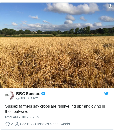 "Twitter post by @BBCSussex: Sussex farmers say crops are ""shriveling-up"" and dying in the heatwave."