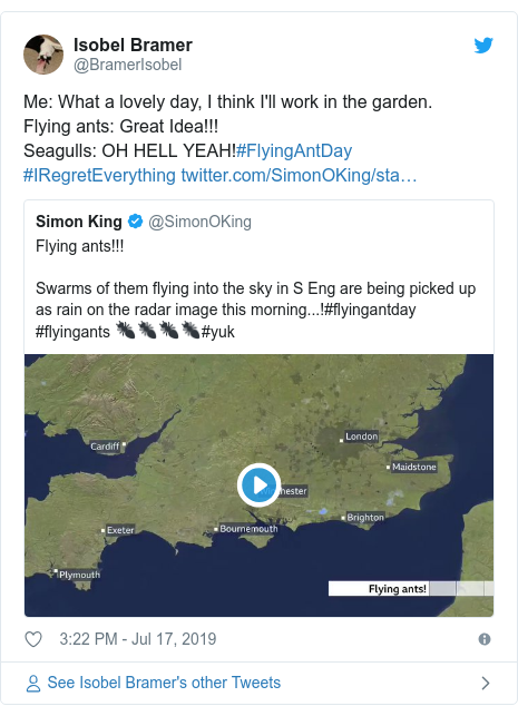 Twitter post by @BramerIsobel: Me  What a lovely day, I think I'll work in the garden.Flying ants  Great Idea!!!Seagulls  OH HELL YEAH!#FlyingAntDay #IRegretEverything