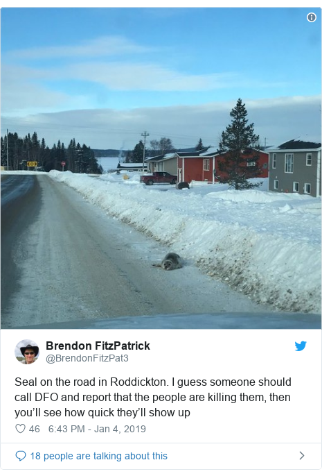 Twitter post by @BrendonFitzPat3: Seal on the road in Roddickton. I guess someone should call DFO and report that the people are killing them, then you'll see how quick they'll show up