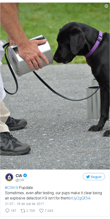 Twitter post de @CIA: #CIAK9 Pupdate Sometimes, even after testing, our pups make it clear being an explosive detection K9 isn't for them