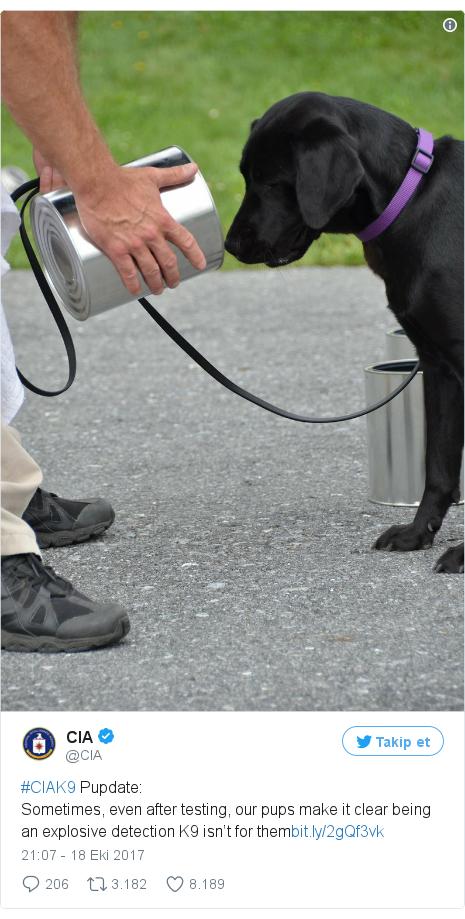 @CIA tarafından yapılan Twitter paylaşımı: #CIAK9 Pupdate Sometimes, even after testing, our pups make it clear being an explosive detection K9 isn't for them