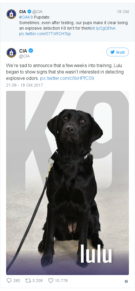Twitter pesan oleh @CIA: We're sad to announce that a few weeks into training, Lulu began to show signs that she wasn't interested in detecting explosive odors.