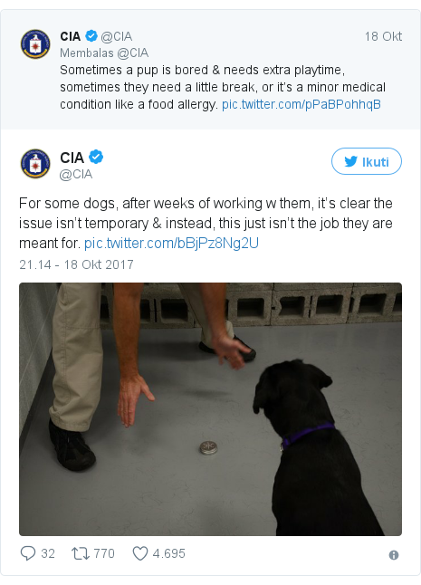 Twitter pesan oleh @CIA: For some dogs, after weeks of working w them, it's clear the issue isn't temporary & instead, this just isn't the job they are meant for.
