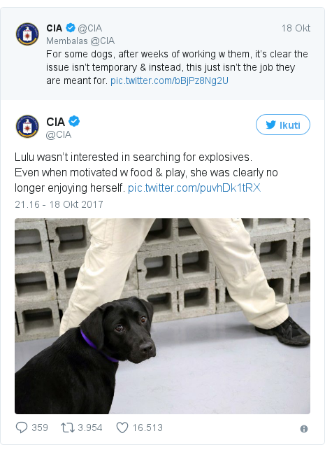 Twitter pesan oleh @CIA: Lulu wasn't interested in searching for explosives.Even when motivated w food & play, she was clearly no longer enjoying herself.