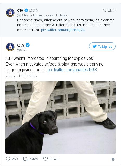 @CIA tarafından yapılan Twitter paylaşımı: Lulu wasn't interested in searching for explosives.Even when motivated w food & play, she was clearly no longer enjoying herself.