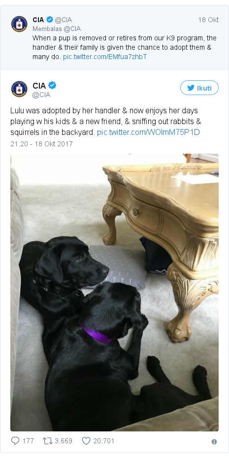 Twitter pesan oleh @CIA: Lulu was adopted by her handler & now enjoys her days playing w his kids & a new friend, & sniffing out rabbits & squirrels in the backyard.
