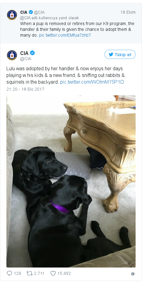 @CIA tarafından yapılan Twitter paylaşımı: Lulu was adopted by her handler & now enjoys her days playing w his kids & a new friend, & sniffing out rabbits & squirrels in the backyard.