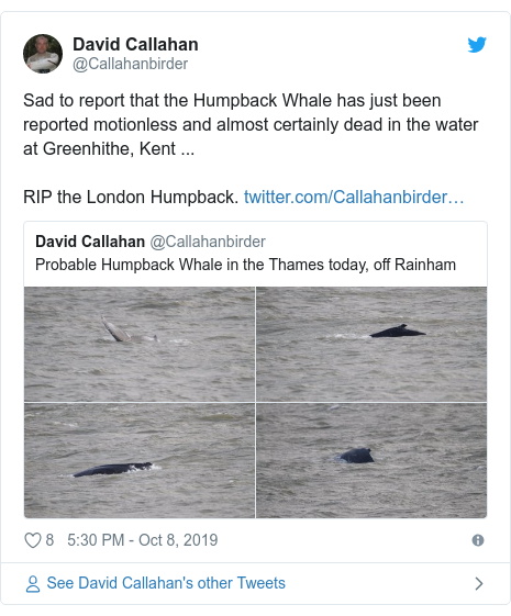Twitter post by @Callahanbirder: Sad to report that the Humpback Whale has just been reported motionless and almost certainly dead in the water at Greenhithe, Kent ...RIP the London Humpback.