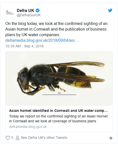 Twitter post by @DefraGovUK: On the blog today, we look at the confirmed sighting of an Asian hornet in Cornwall and the publication of business plans by UK water companies.