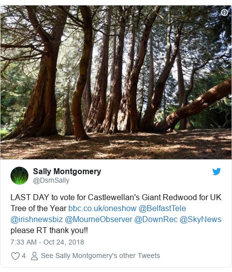 Twitter post by @DsmSally: LAST DAY to vote for Castlewellan's Giant Redwood for UK Tree of the Year  @BelfastTele @irishnewsbiz @MourneObserver @DownRec @SkyNews please RT thank you!!