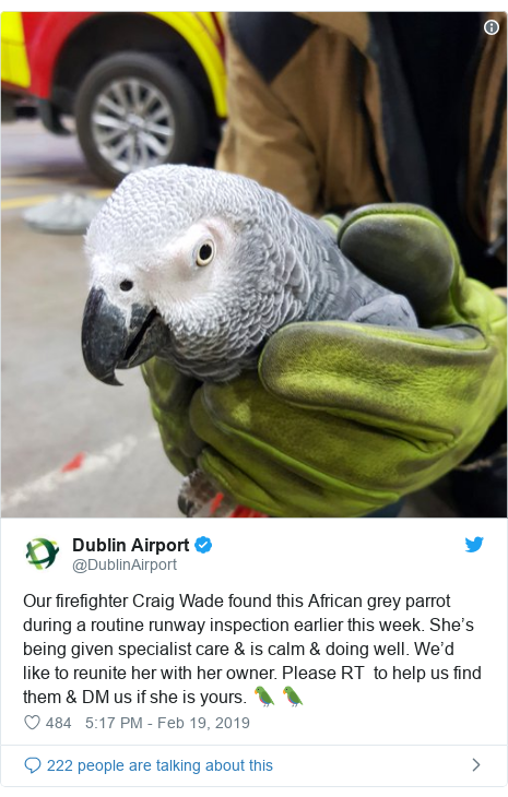 Twitter post by @DublinAirport: Our firefighter Craig Wade found this African grey parrot during a routine runway inspection earlier this week. She's being given specialist care & is calm & doing well. We'd like to reunite her with her owner. Please RT  to help us find them & DM us if she is yours. 🦜 🦜