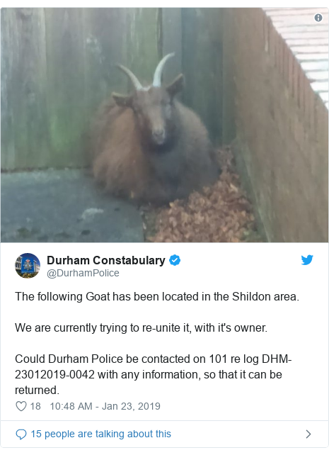Twitter post by @DurhamPolice: The following Goat has been located in the Shildon area. We are currently trying to re-unite it, with it's owner.Could Durham Police be contacted on 101 re log DHM-23012019-0042 with any information, so that it can be returned.