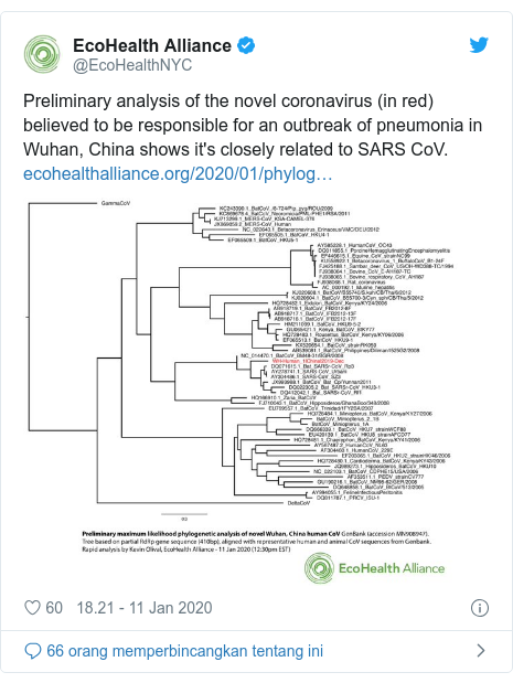 Twitter pesan oleh @EcoHealthNYC: Preliminary analysis of the novel coronavirus (in red) believed to be responsible for an outbreak of pneumonia in Wuhan, China shows it's closely related to SARS CoV.