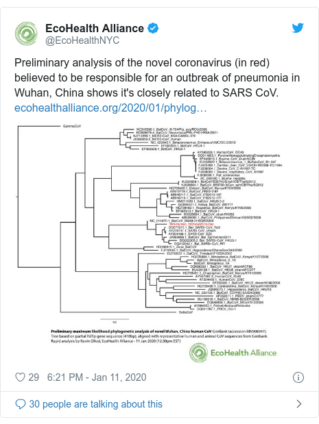 Twitter post by @EcoHealthNYC: Preliminary analysis of the novel coronavirus (in red) believed to be responsible for an outbreak of pneumonia in Wuhan, China shows it's closely related to SARS CoV.