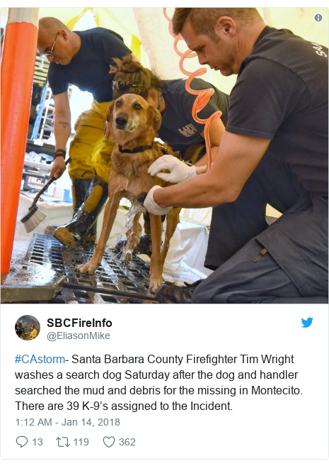 Twitter post by @EliasonMike: #CAstorm- Santa Barbara County Firefighter Tim Wright washes a search dog Saturday after the dog and handler searched the mud and debris for the missing in Montecito. There are 39 K-9's assigned to the Incident.