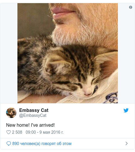 Twitter пост, автор: @EmbassyCat: New home! I've arrived!