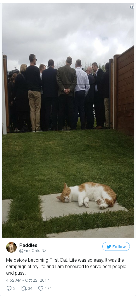 Twitter post by @FirstCatofNZ: Me before becoming First Cat. Life was so easy. It was the campaign of my life and I am honoured to serve both people and puss.