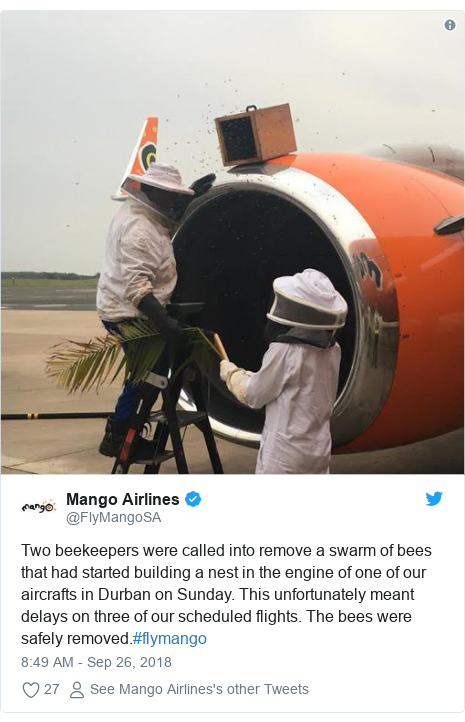 Twitter post by @FlyMangoSA: Two beekeepers were called into remove a swarm of bees that had started building a nest in the engine of one of our aircrafts in Durban on Sunday. This unfortunately meant delays on three of our scheduled flights. The bees were safely removed.#flymango