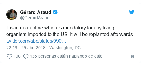 Publicación de Twitter por @GerardAraud: It is in quarantine which is mandatory for any living organism imported to the US. It will be replanted afterwards.