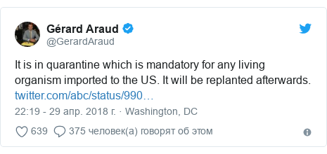 Twitter post by @GerardAraud: It is in quarantine which is mandatory for any living organism imported to the US. It will be replanted afterwards.