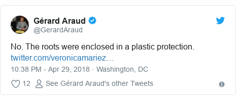 Twitter post by @GerardAraud: No. The roots were enclosed in a plastic protection.