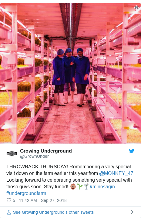 Twitter post by @GrownUnder: THROWBACK THURSDAY! Remembering a very special visit down on the farm earlier this year from @MONKEY_47 Looking forward to celebrating something very special with these guys soon. Stay tuned! 🐵🌱🍸#minesagin #undergroundfarm