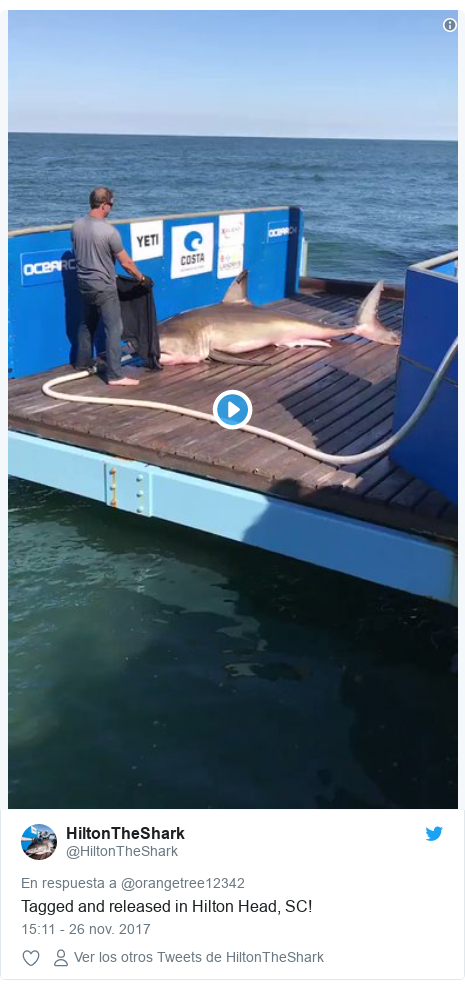 Publicación de Twitter por @HiltonTheShark: Tagged and released in Hilton Head, SC!