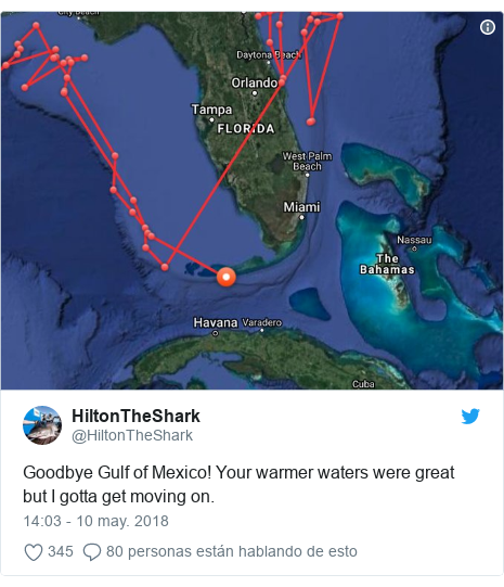Publicación de Twitter por @HiltonTheShark: Goodbye Gulf of Mexico! Your warmer waters were great but I gotta get moving on.
