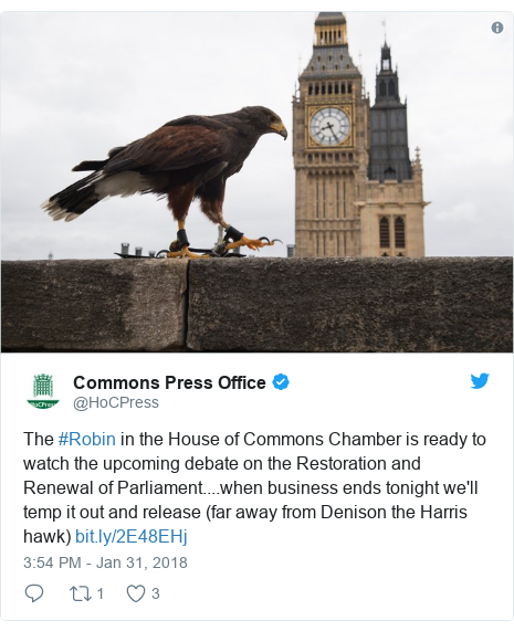 Twitter post by @HoCPress: The #Robin in the House of Commons Chamber is ready to watch the upcoming debate on the Restoration and Renewal of Parliament....when business ends tonight we'll temp it out and release (far away from Denison the Harris hawk)