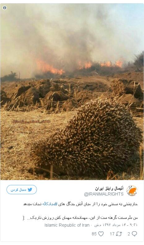پست توییتر از @IRANIMALRIGHTS