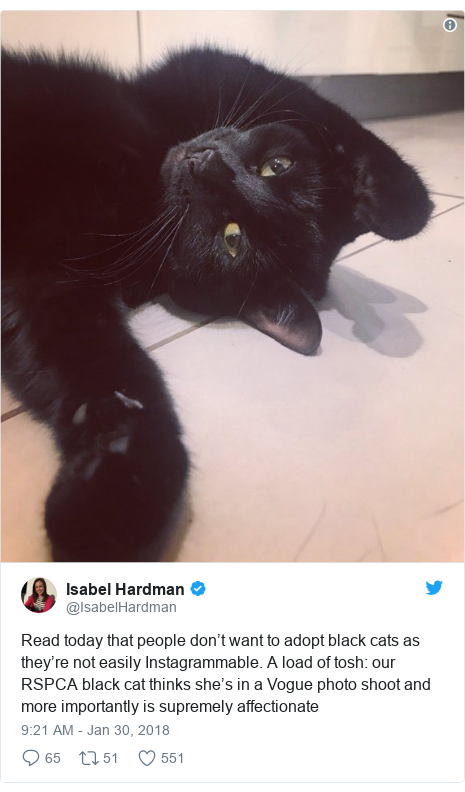 Twitter post by @IsabelHardman: Read today that people don't want to adopt black cats as they're not easily Instagrammable. A load of tosh  our RSPCA black cat thinks she's in a Vogue photo shoot and more importantly is supremely affectionate