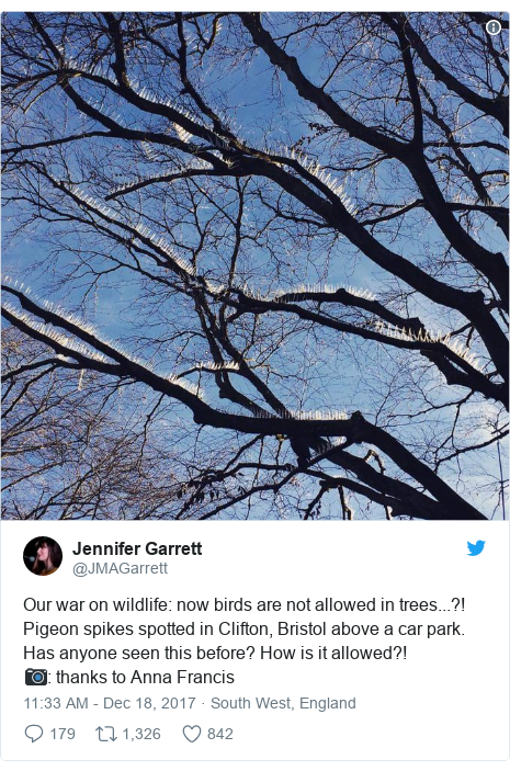 Twitter post by @JMAGarrett: Our war on wildlife  now birds are not allowed in trees...?! Pigeon spikes spotted in Clifton, Bristol above a car park. Has anyone seen this before? How is it allowed?!📷  thanks to Anna Francis