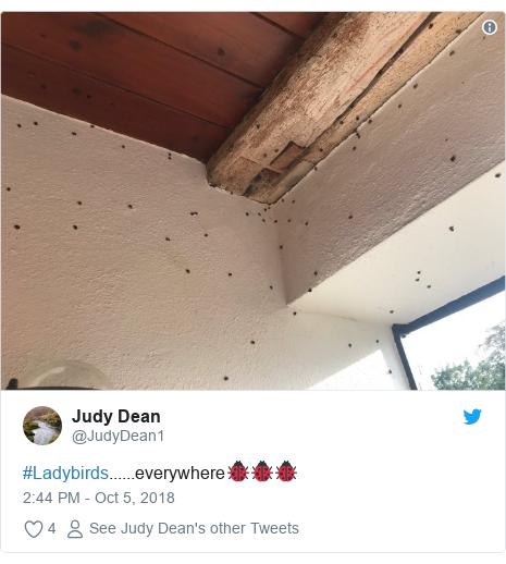 Twitter post by @JudyDean1: #Ladybirds......everywhere🐞🐞🐞