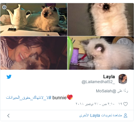 تويتر رسالة بعث بها @Lailamedhat52_: #لا_لانتهاك_حقوق_الحيوانات bunnie💖