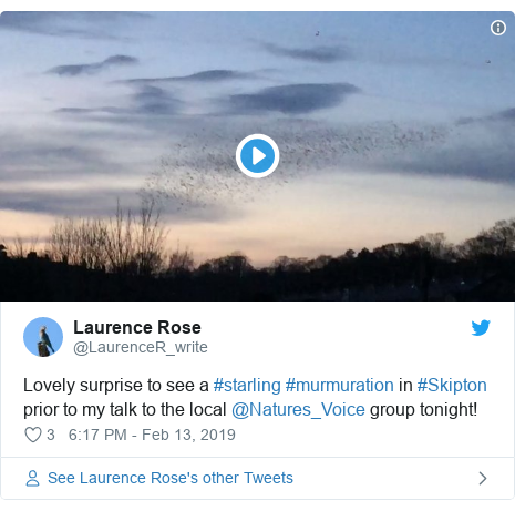 Twitter post by @LaurenceR_write: Lovely surprise to see a #starling #murmuration in #Skipton prior to my talk to the local ⁦@Natures_Voice⁩ group tonight!