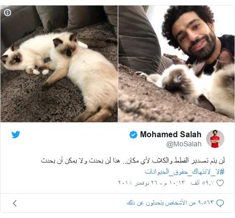 تويتر رسالة بعث بها @MoSalah: لن يتم تصدير القطط والكلاب لأي مكان.. هذا لن يحدث ولا يمكن أن يحدث #لا_لانتهاك_حقوق_الحيوانات