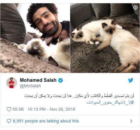 Twitter post by @MoSalah: لن يتم تصدير القطط والكلاب لأي مكان.. هذا لن يحدث ولا يمكن أن يحدث #لا_لانتهاك_حقوق_الحيوانات