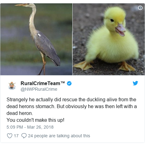 Twitter post by @NWPRuralCrime: Strangely he actually did rescue the duckling alive from the dead herons stomach. But obviously he was then left with a dead heron.You couldn't make this up!