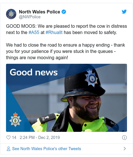 Twitter post by @NWPolice: GOOD MOOS  We are pleased to report the cow in distress next to the #A55 at #Rhuallt has been moved to safety. We had to close the road to ensure a happy ending - thank you for your patience if you were stuck in the queues - things are now mooving again!