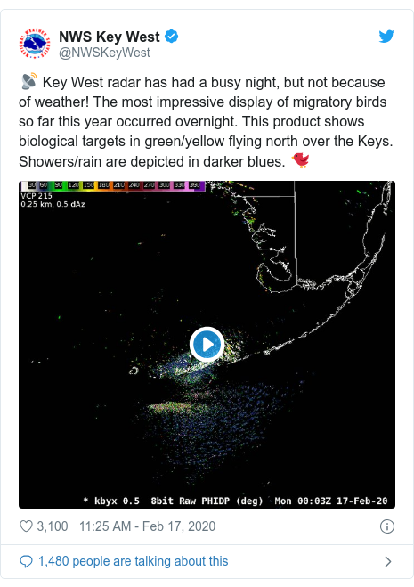 Twitter post by @NWSKeyWest: 📡 Key West radar has had a busy night, but not because of weather! The most impressive display of migratory birds so far this year occurred overnight. This product shows biological targets in green/yellow flying north over the Keys. Showers/rain are depicted in darker blues. 🐦