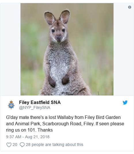 Twitter post by @NYP_FileySNA: G'day mate there's a lost Wallaby from Filey Bird Garden and Animal Park, Scarborough Road, Filey. If seen please ring us on 101. Thanks