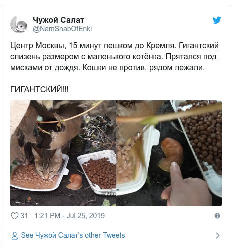 Twitter post by @NamShabOfEnki: Центр Москвы, 15 минут пешком до Кремля. Гигантский слизень размером с маленького котёнка. Прятался под мисками от дождя. Кошки не против, рядом лежали.ГИГАНТСКИЙ!!!