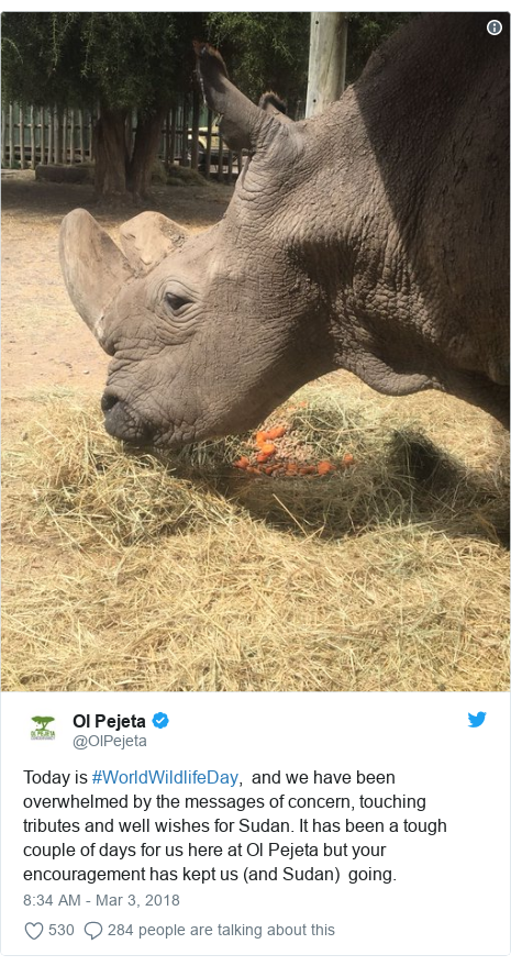 Twitter post by @OlPejeta: Today is #WorldWildlifeDay,  and we have been overwhelmed by the messages of concern, touching  tributes and well wishes for Sudan. It has been a tough couple of days for us here at Ol Pejeta but your encouragement has kept us (and Sudan)  going.