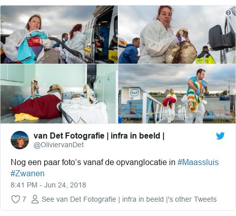 Twitter post by @OliviervanDet: Nog een paar foto's vanaf de opvanglocatie in #Maassluis #Zwanen