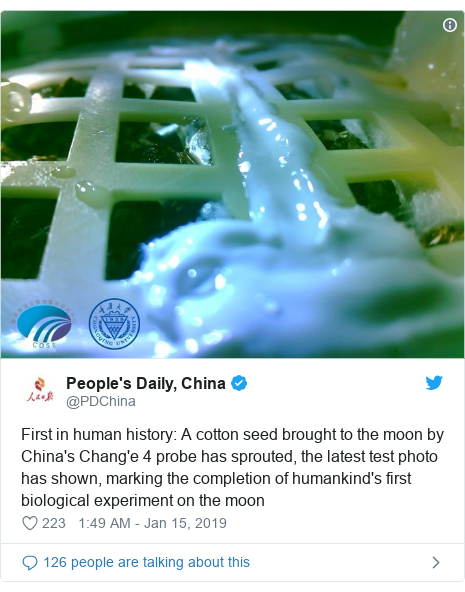 Twitter හි @PDChina කළ පළකිරීම: First in human history  A cotton seed brought to the moon by China's Chang'e 4 probe has sprouted, the latest test photo has shown, marking the completion of humankind's first biological experiment on the moon